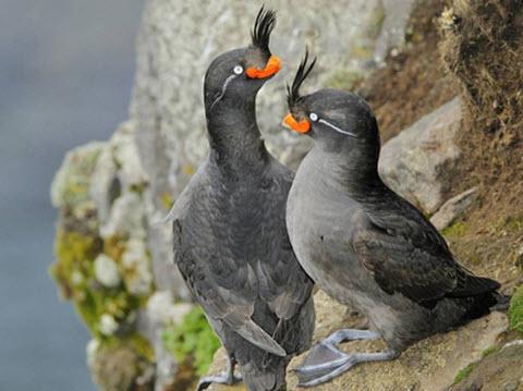 Oiseaux_Rares