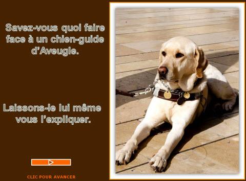 chien d'aveugle