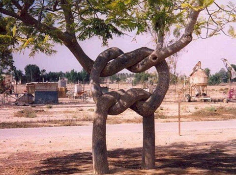 arbres_exceptionnels
