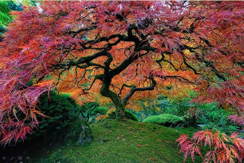 15_arbres_parmi_les_plus_beaux