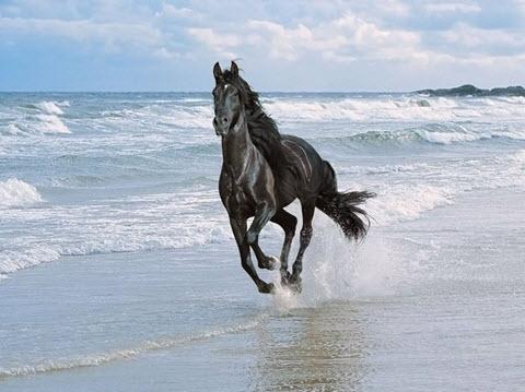chevaux et miroirs