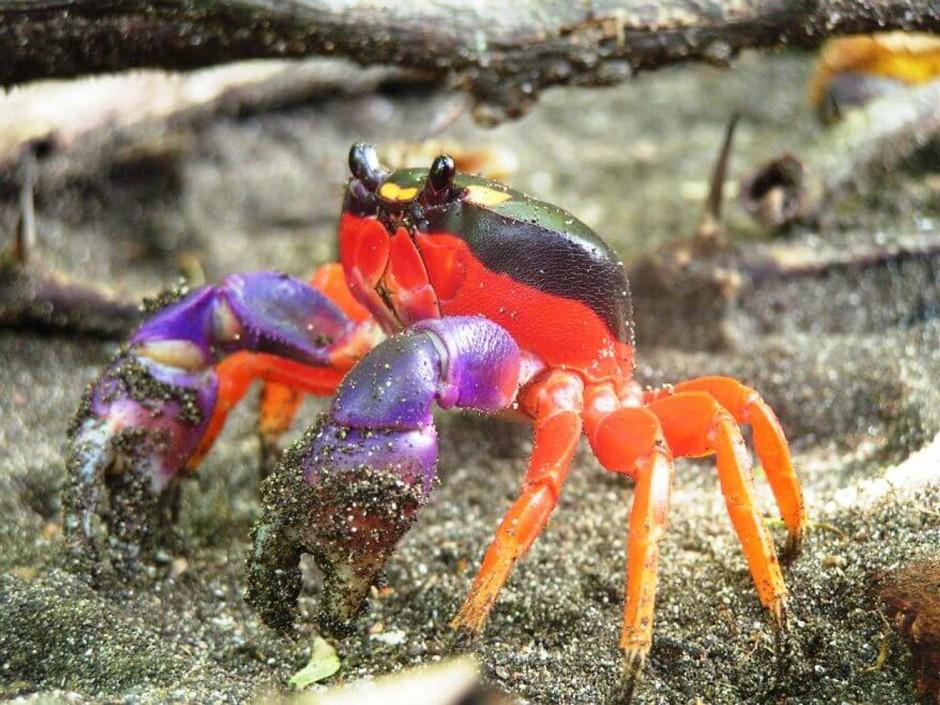 25 animaux aux couleurs improbables mais vraies1