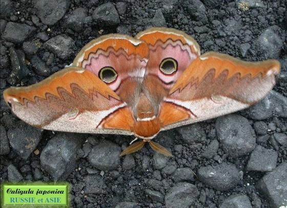 Papillons du monde_a