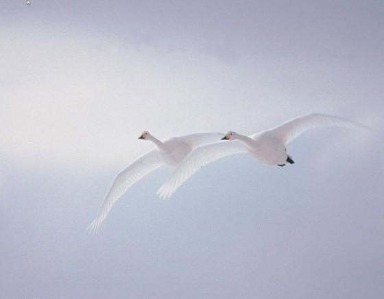 symphonie-du-blanc